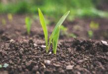 Sposoby usuwania chwastów z upraw rolnych